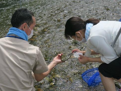 水生生物採集の様子